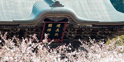 建長寺の桜