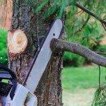 庭つき物件で入居者が勝手に木を切った。弁償してもらえる?